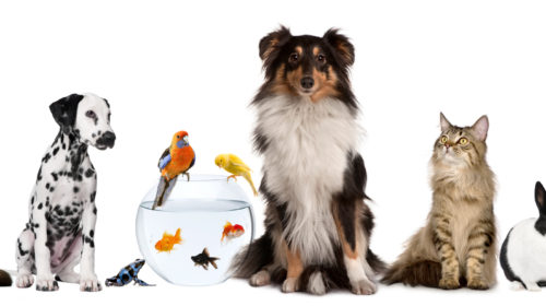 Does Buying VIP Pet Insurance Benefit You and Your Pet?
