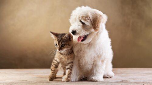 The Best Pet Rabbit Insurance Coverage