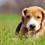 Why Pet Insurance is an Investment of Love